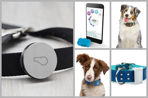 new technology for dogs pitbulls go pitbull dog forums top 10 tech accessories