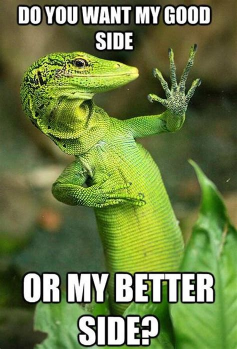Reptile Memes - reptiles are cocky funny pinterest