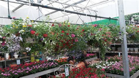 hang planten bloemen buiten buiten hangplanten kopen tuincentrum w verheijen