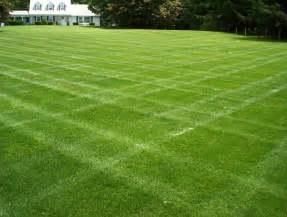 dutch touch blog stay informed selecting grass for your