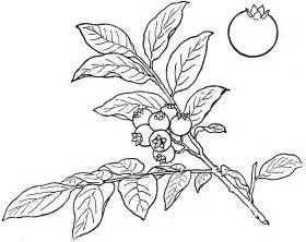 bush blueberry clipart etc