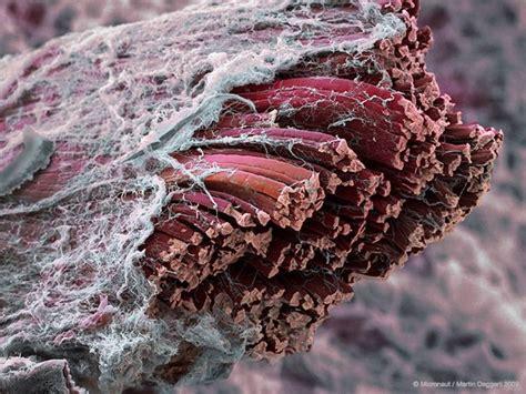 alimentazione per ipertrofia muscolare la sintesi proteica muscolare la causa dell ipertrofia