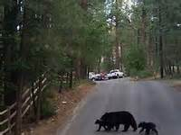timberon nm cabins 17 best images about ruidoso timberon on las