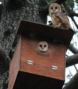 how to attract owls to your backyard pin by karen cimms on outdoor spaces pinterest