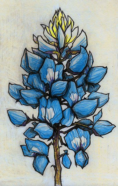 bluebonnet tattoo designs 1000 ideas about bluebonnet on
