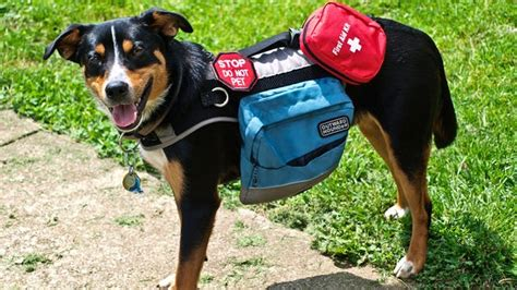 how to get a service dogs how to find a psychiatric service policygenius