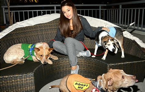 badass dog houses badass vegan ariana grande is helping 15 nyc rescue dogs