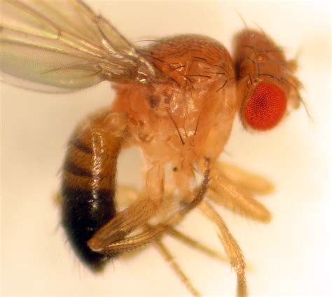 fruit flies in the population health blog may 2013