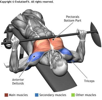 bench muscles chest barbell decline bench press cardio workouts
