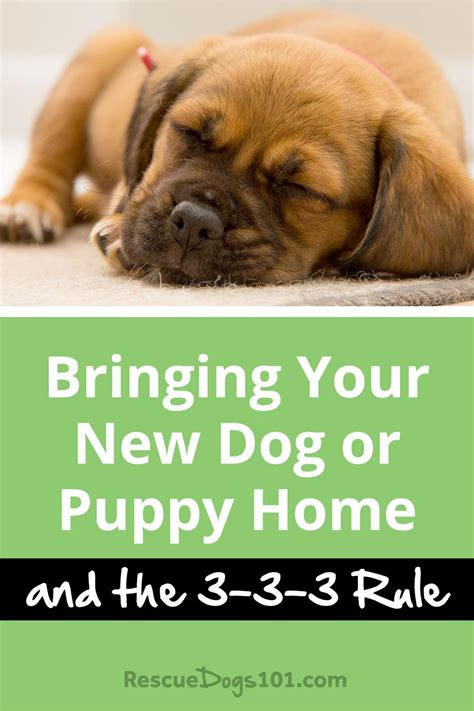 bringing a puppy home bringing your new home and the 3 3 3 rule rescue dogs 101