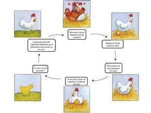cycle de vie de la poule p 226 ques pinterest worksheets