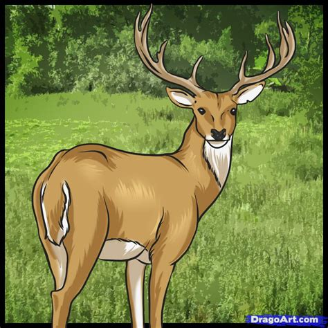 how to a deer how to draw a deer step by step forest animals animals free drawing