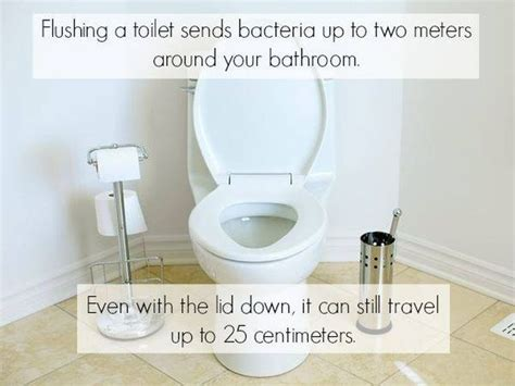 bathroom facts toilet bacteria facts pictures photos and images for