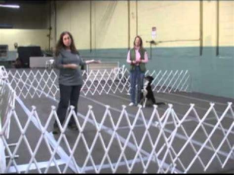 Pattern Games Leslie Mcdevitt | dog training pattern games by leslie mcdevitt youtube