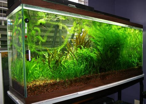 fish tank planter plant fish ta sequa