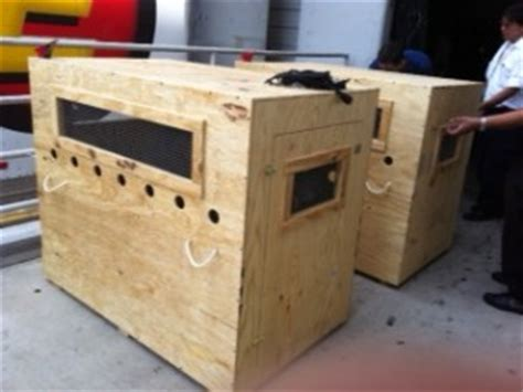 shipping a puppy by air custom modified pet shipping crates pet air carrier llc