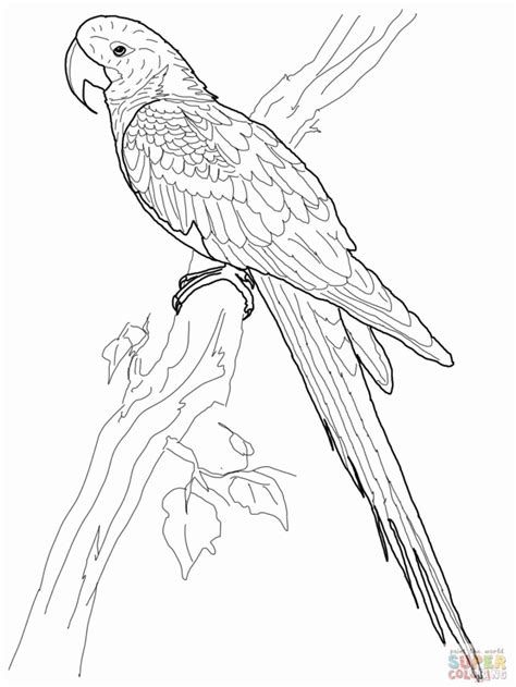 flying parrot coloring pages bird flying cartoon coloring home