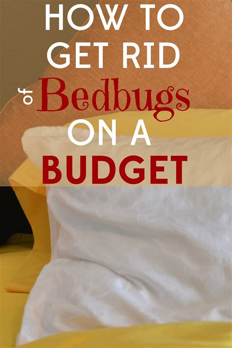 how much to get rid of bed bugs how much to get rid of bed bugs 28 images bed bugs