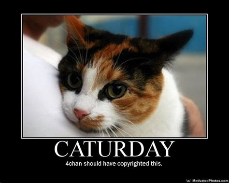 Caturday Meme - caturday image gallery sorted by comments know your meme