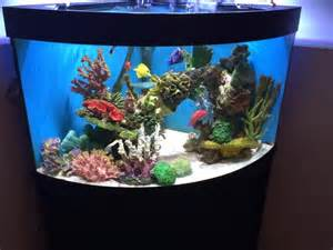 : For sale i have a Juwel Trigon 350 litre Bow front Corner aquarium