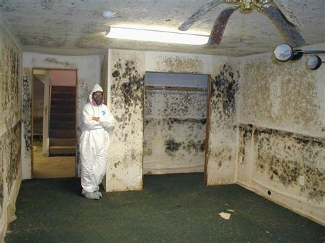 mold in my bedroom mold removal grand rapids vandam krusinga building