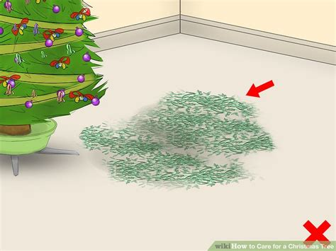 can you overwater a christmas tree my blog