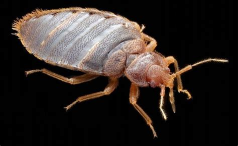 bed bugs registry bigfoot pest control bed bug registry reports