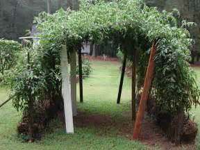 Vertical Gardening Zucchini - straw bale urban gardening ideas and getting started