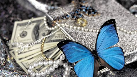 blue butterfly  pearls hd birds  wallpapers images