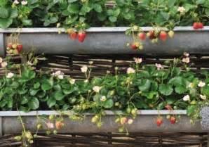 Jardiniere En Zinc