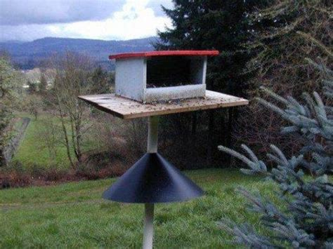 squirrel deterrent bird feeder