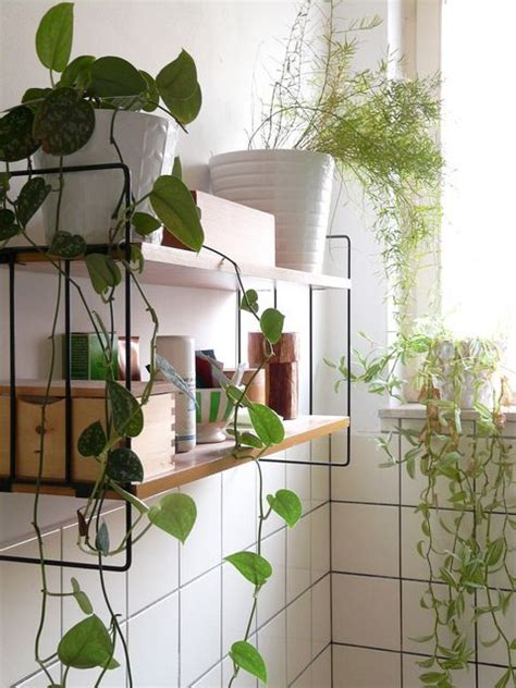 bathroom hanging plants 17 best images about make it green on pinterest plants eye serum and balcony herb