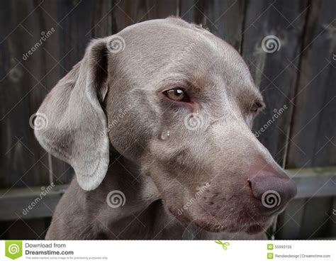 puppy cries all stock photo image 55693159
