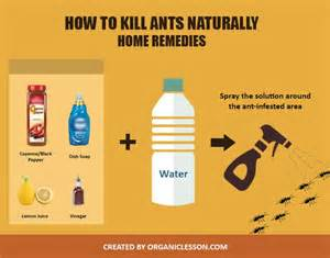 home remedies for ants best 25 killing ants ideas on ant killer