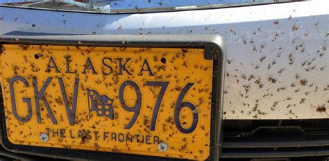 bed bugs alaska my clothing system for backpacking in peak mosquito season andrew skurka