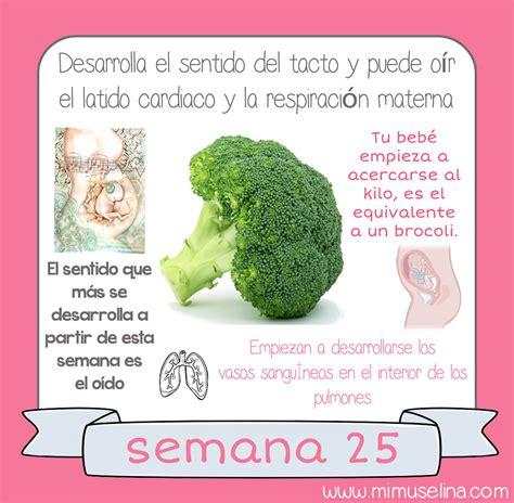 imagenes reales de un feto de 25 semanas bebeblog by mimuselina tu beb 233 semana a semana