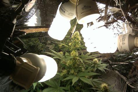 armario interior marihuana casero cultivar marihuana con bombillas de bajo consumo