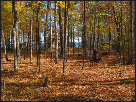 Door County Land For Sale by Door County Real Estate Chambers Island Land For Sale