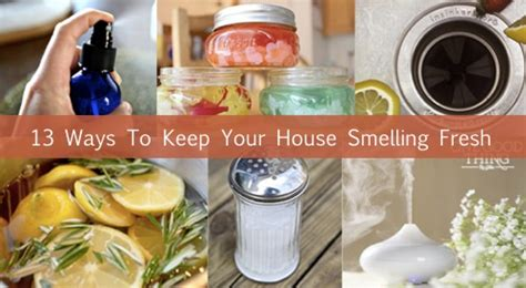how to keep your house smelling good 13 odor eliminators to keep your house smelling fresh homestead survival