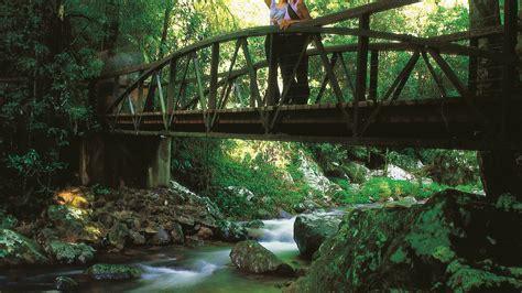 Springbrook Rainforest Cabins by Bridge Springbrook National Park Springbrook