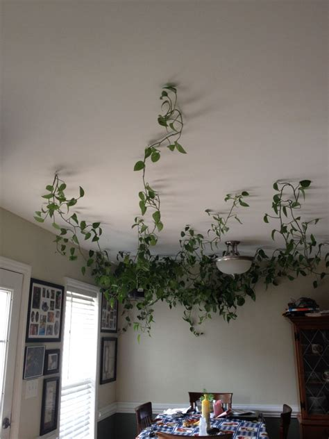 creates interesting vine plants mini garden indoor decohoms
