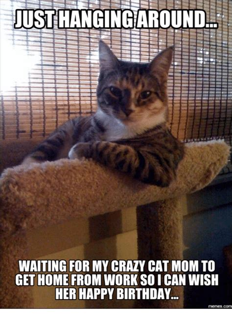 Cat Mom Meme - 25 best memes about cat mom cat mom memes