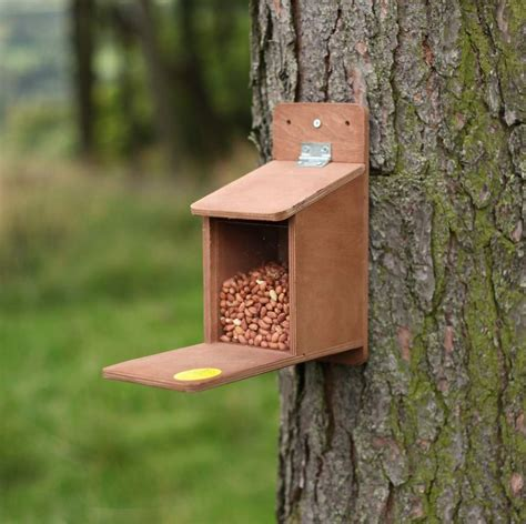 how to get birds to your feeder wild about birds bluebird