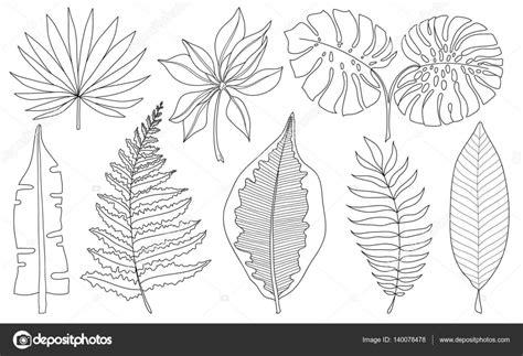 imagenes de hojas a blanco y negro conjunto de vectores de palmeras tropicales de hojas