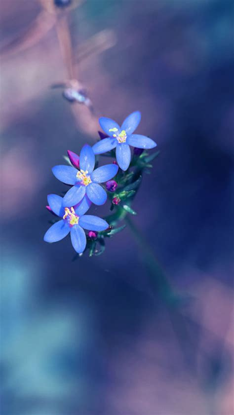 Small Wallpaper | small fresh blue flowers wallpaper for iphone 5 iphone