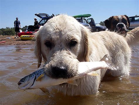 fish for puppies can dogs eat sardines for a healthy diet the effect