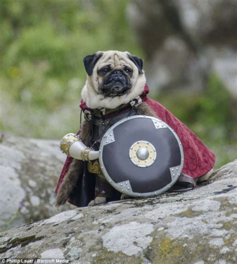gandalf pug heel gandalf owner dresses his pet pugs in hilarious costumes from lord of the