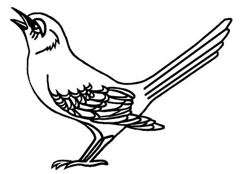mockingbird coloring pages free coloring pages of northern mocking bird