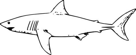 White Shark Outline Clip Art At Clker Com Vector Clip Art Online Royalty Free Public Domain Great White Shark Template
