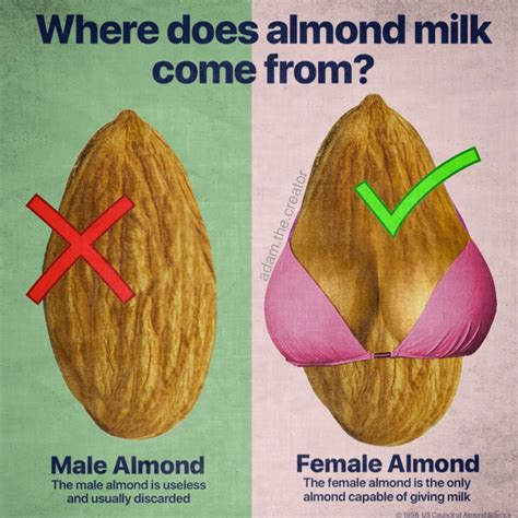 Where Does Meme Come From - where does almond milk come from adam the creator